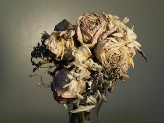 dead flowers2